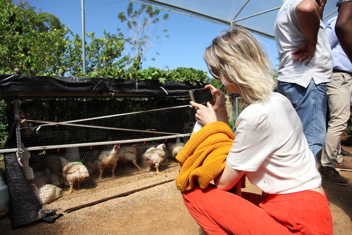 Conference Participant Takes Photo Learning Journey Farm Food Systems Chickens